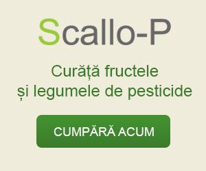 scallo-p.ro