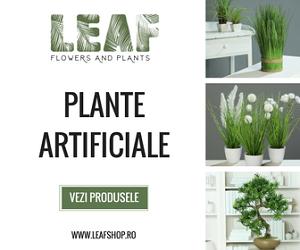 leafshop.ro/